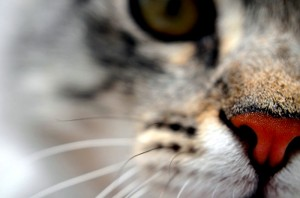 Cat'swhiskers