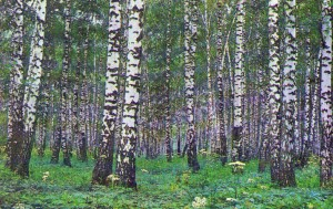 Russian birches