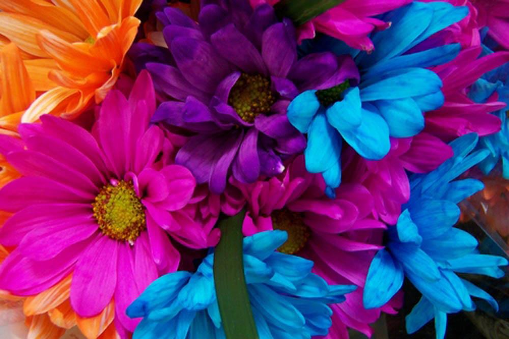 b-dayflowers
